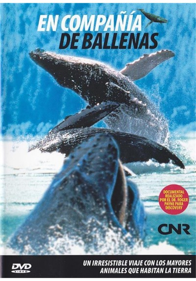 En Compañia De Ballenas