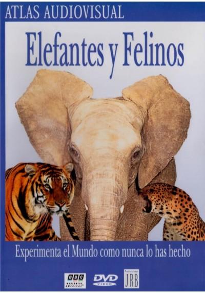 Elefantes Y Felinos