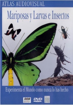 Mariposas Y Larvas E Insectos