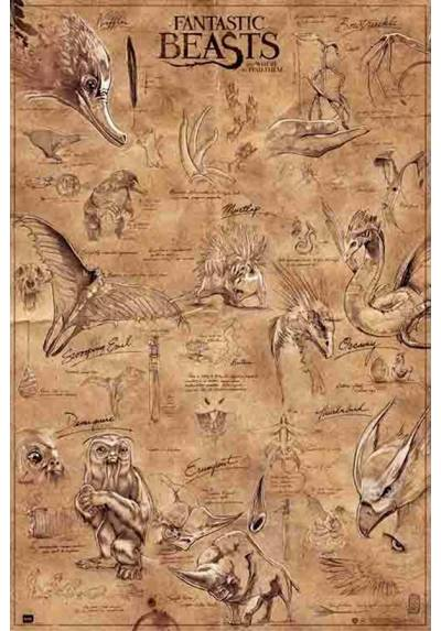 Poster Animales Fantasticos y Donde Encontrarlos (Fantastic Beasts and Where to Find Them) (POSTER 61 x 91,5)