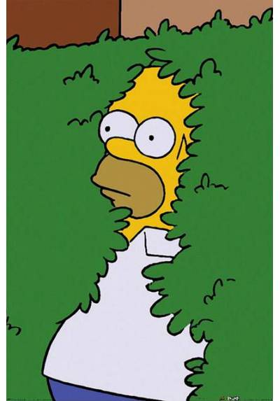 Poster Homer Simpson (POSTER 61 x 91,5)